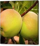 Backyard Garden Series - Two Apples Canvas Print