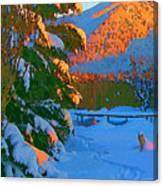 Backyard Glow Canvas Print