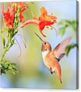 Backyard Hummingbird Series # 54 Canvas Print