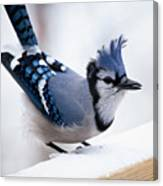 Bad Feather Day Canvas Print