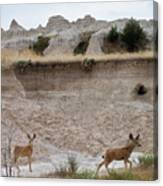 Badlands Deer Sd Canvas Print