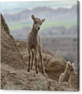 Badlands Dynamic Duo Canvas Print