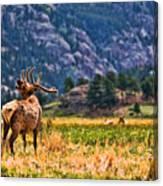 Badlands Elk  Canvas Print