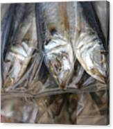 Bag O' Fish 2 Canvas Print