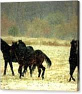Bailando De Los Caballos En Viento Y Nieve Canvas Print