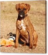 Bailey The Boxer Puppy Canvas Print
