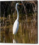 Bailey Tract Egret Two Canvas Print
