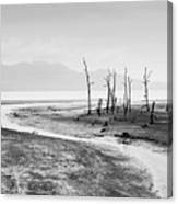 Bako National Park At Low Tide. Canvas Print