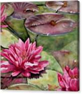 Balboa Water Lilies Canvas Print