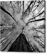 Bald Cypress Sky Canvas Print