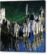 Bald Cypress Stump Canvas Print