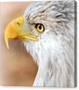 Bald Eagle 15 Canvas Print