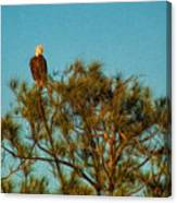 Bald Eagle Burnt Store Marina Florida Canvas Print