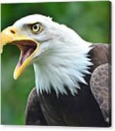 Bald Eagle Close Up Canvas Print