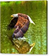 Bald Eagle Cutting The Water Canvas Print