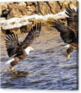Bald Eagle Fishing Pano Canvas Print