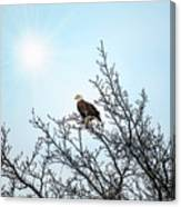 Bald Eagle In A Tree Enjoying The Sunlight Canvas Print