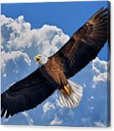 Bald Eagle In Flight Calling Out Canvas Print