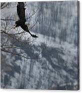Bald Eagle In Flight-signed-#4014 Canvas Print
