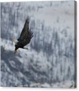 Bald Eagle In Flight-signed-#4016 Canvas Print