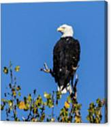 Bald Eagle In The Tree Canvas Print