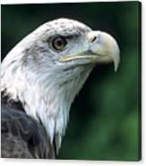 Bald Eagle On Guard Canvas Print