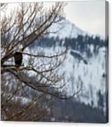 Bald Eagle Perched-signed-#4008 Canvas Print