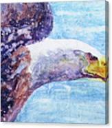 Bald Eagle Portrait 2 Canvas Print