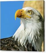 Bald Eagle Profile 4 Canvas Print
