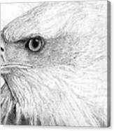 Bald Eagle Profile Canvas Print