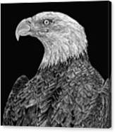 Bald Eagle Scratchboard Canvas Print