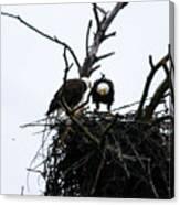 Bald Eagles Along The Delaware River Canvas Print