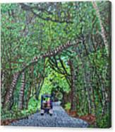 Bald Head Island, Federal Road Canvas Print