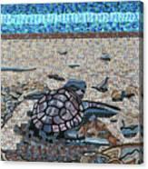 Bald Head Island, Loggerhead Sea Turtle Canvas Print