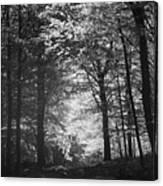 Baldringe Meadows Canvas Print