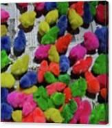 Bali Coloured Chicks Canvas Print