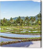 Bali Rice Paddies Canvas Print