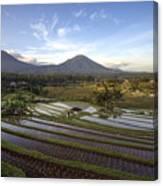 Bali Terrace Rice Field Canvas Print