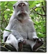 Balinese Serious Monkey Canvas Print