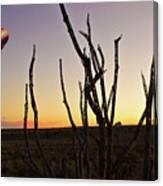 Ballooning At Sunset Canvas Print