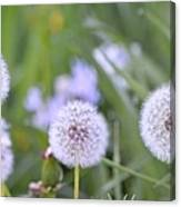 Balls Of Seed Canvas Print