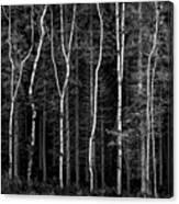 Ballysallagh Forest Mono Canvas Print