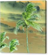 Balmy Palmy Canvas Print