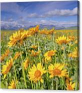 Balsam On The Rocky Mountain Front Canvas Print