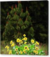 Balsamroot And Evergreen Canvas Print