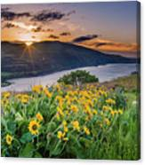 Balsamroot At Sunrise Canvas Print