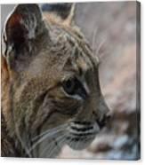 Bama Bobcat Canvas Print