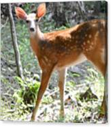 Bambi1 Canvas Print