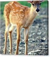 Bambi2 Canvas Print