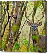 Bambi's Father Canvas Print
